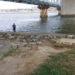 荒川・砂町水辺公園の釣り情報