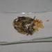 ヌマチチブ(ダボハゼ)の天ぷら