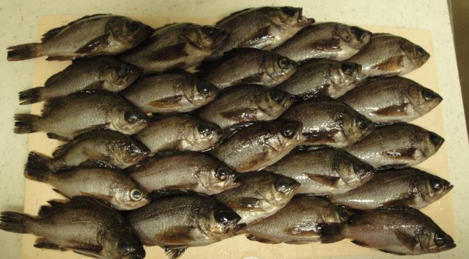 一晩でメバル30匹以上をルアーで釣ることができた「那珂湊漁港」