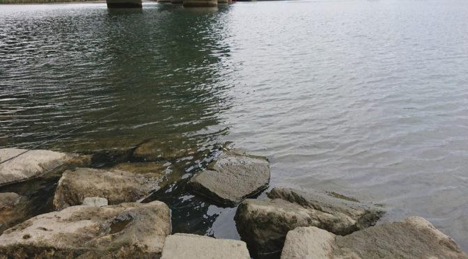 ルアーフィッシングで荒川のハゼを釣ることができるか!?