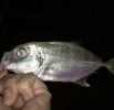 釣り人七不思議-魚を食べない釣り人-