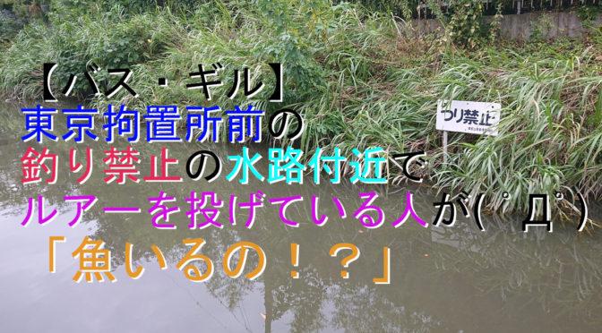 【バス・ギル】東京拘置所前の釣り禁止の水路付近でルアーを投げている人が( ゚Д゚)「魚いるの!?」