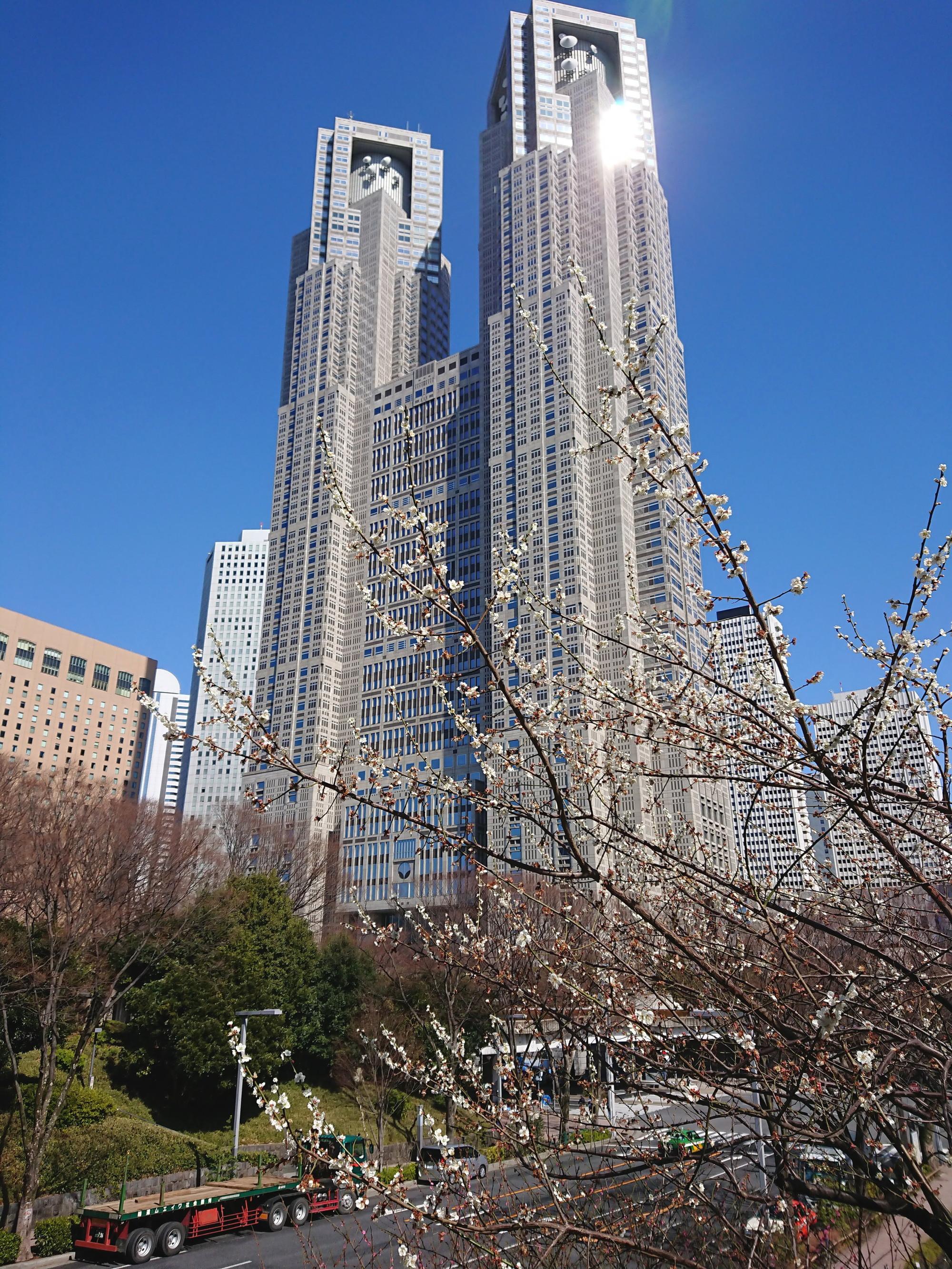 新宿中央公園の散歩